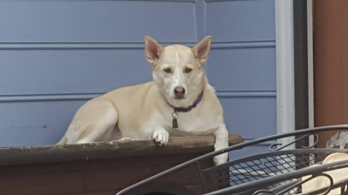 Chair Dog House