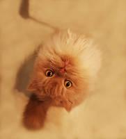 a cat by KYAV