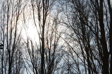 Trees in the sun by AugustusAidan