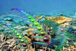 Fractals of the Sea