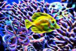 Fish Love Fractals