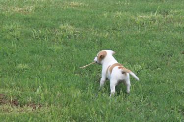 Rox has a Stick by LoloAlien