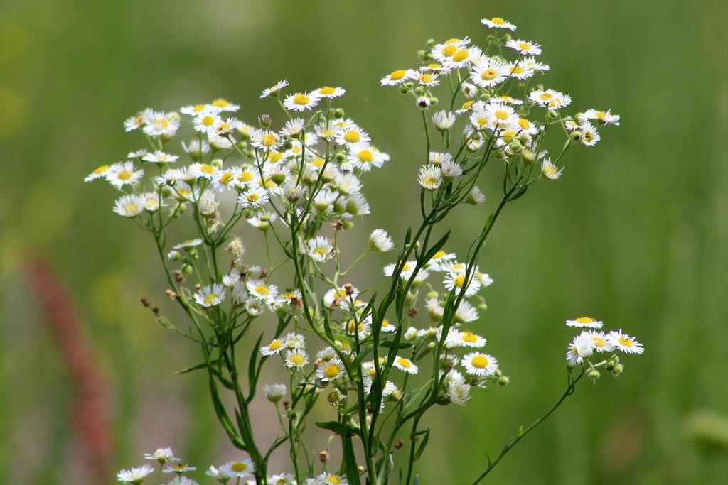 Wild Flowers by LoloAlien