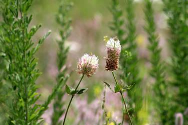 Wild Flowers 2 by LoloAlien