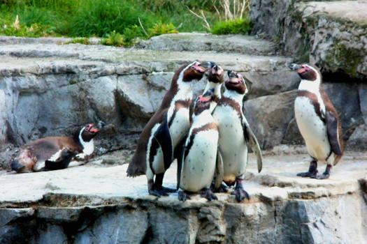 Penguin Rhapsody