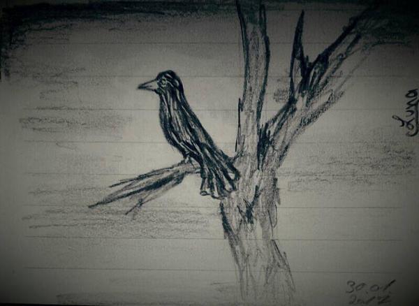 CrowKing by Niivo