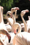 flamingogroup