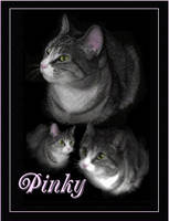 Queen Pinky by InfinitiesEnd
