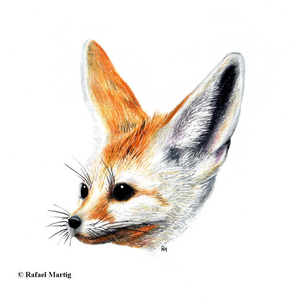 Fennec Fox by RafaelDavid