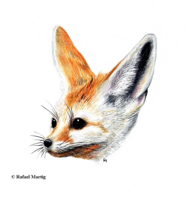 how to draw a fennec fox easy