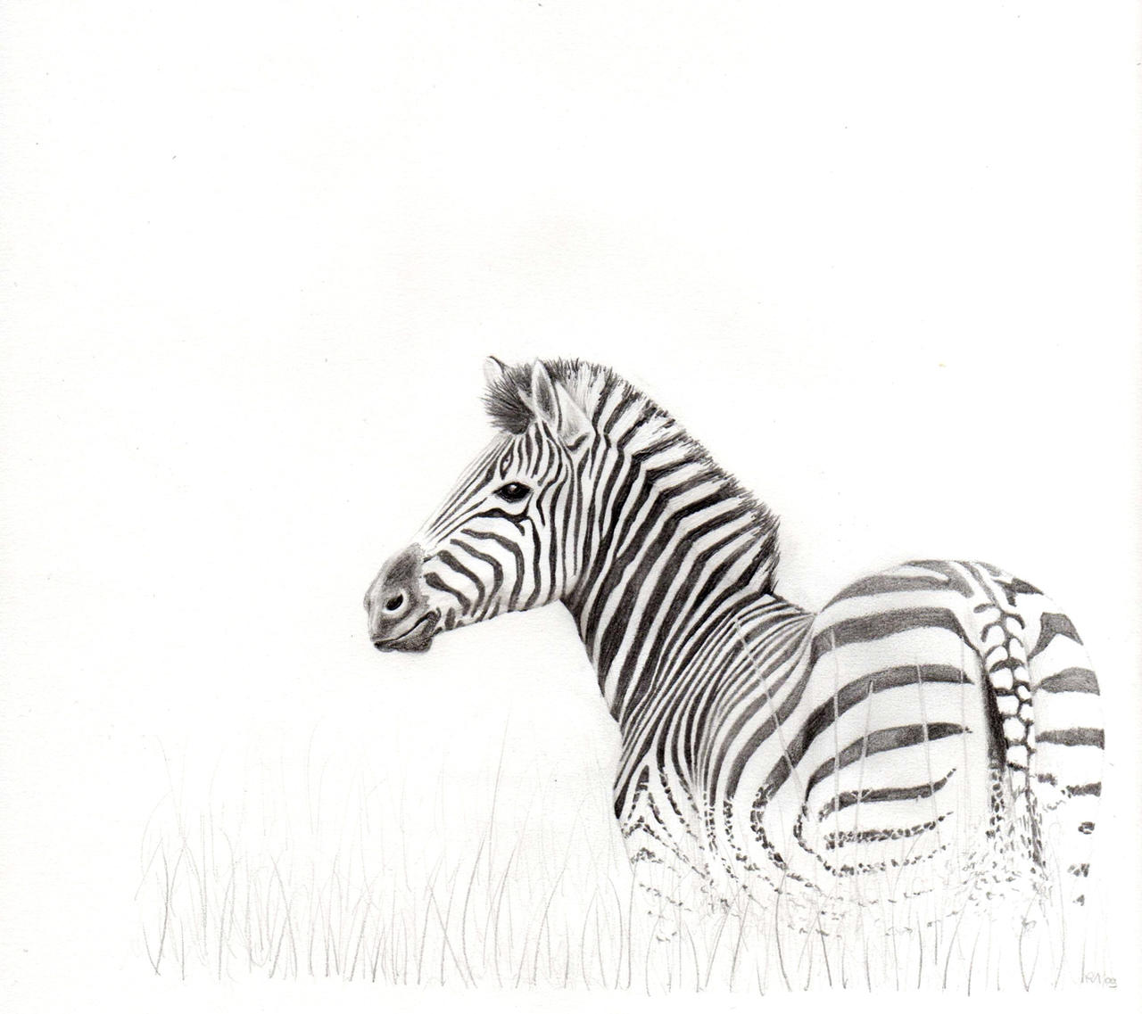 zebra pencil drawing - photo #18