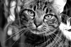 cat 2 by papayasweet