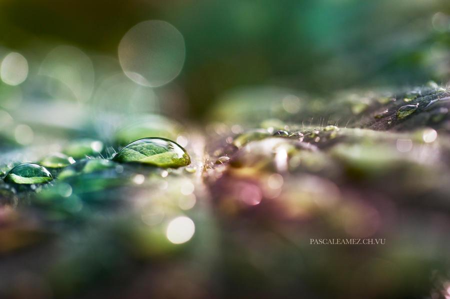 rain drops by papayasweet