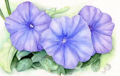 Petunia by Eeni