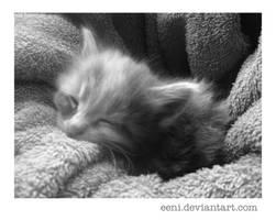 Kitty by Eeni