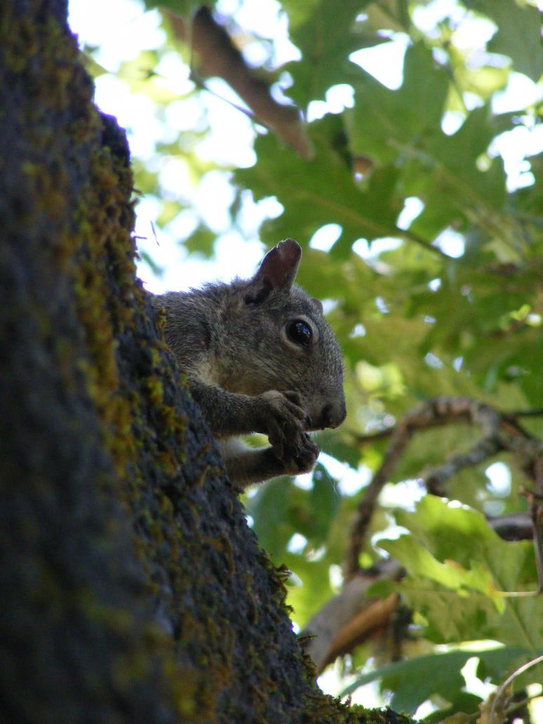 Up A Tree by SLJones-photo