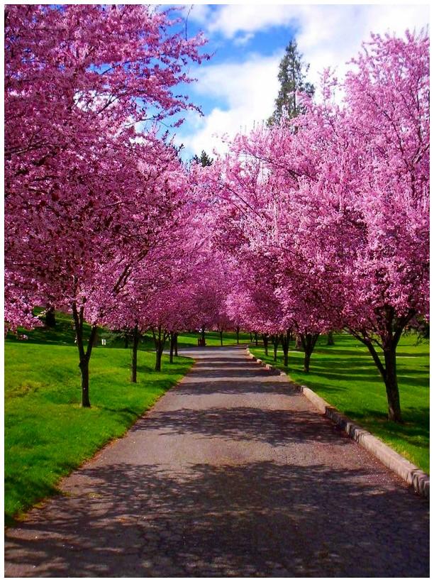 Path of Spring by SLJones-photo