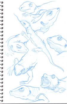 Monitar lizard