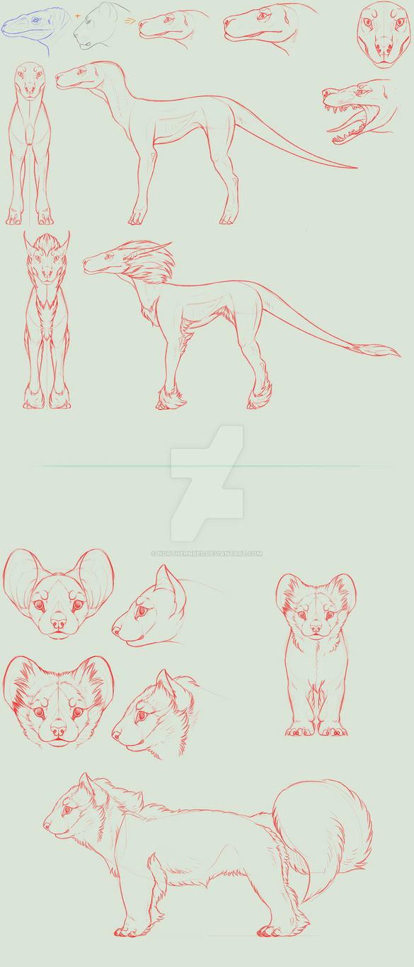 SPECIES CONCEPT + anim. FULL PERMS (CLOSED) by NorthernRed