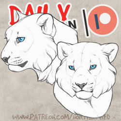 DAILY - snow leopard