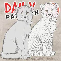 DAILY - cheetah cub