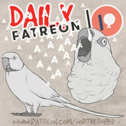 DAILY - parrot