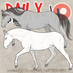 DAILY - horse