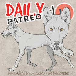 DAILY - indian wolf