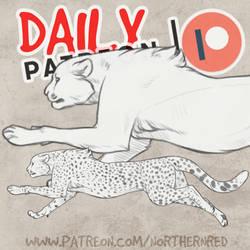 DAILY - cheetah