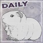 DAILY - guinea pig
