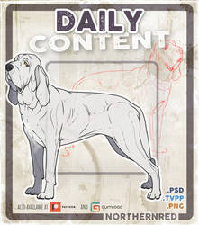 Bloodhound dog pose