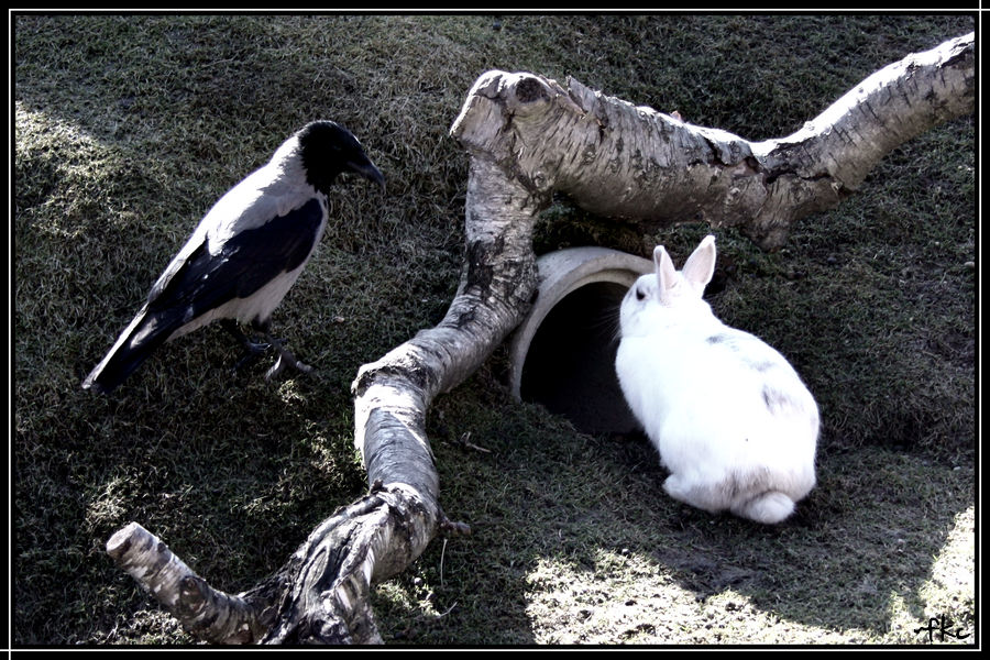 the Crow and the Rabbit.