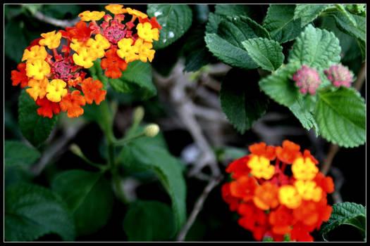 Lovely flowersss.