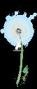 A dandelion puff. Make a wish!