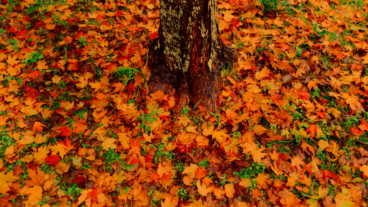 fall scenery clip art
