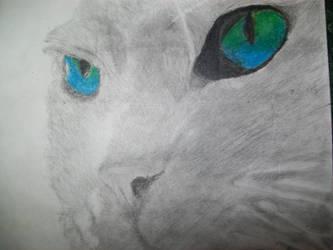 Kitty by Haleykinzz