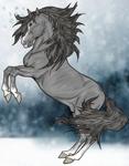 Lippizzaner Stallion in the snow