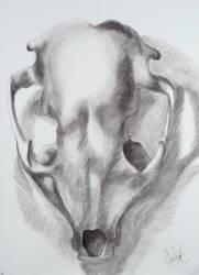 Raccoon skull by xHANNAHELAINEx