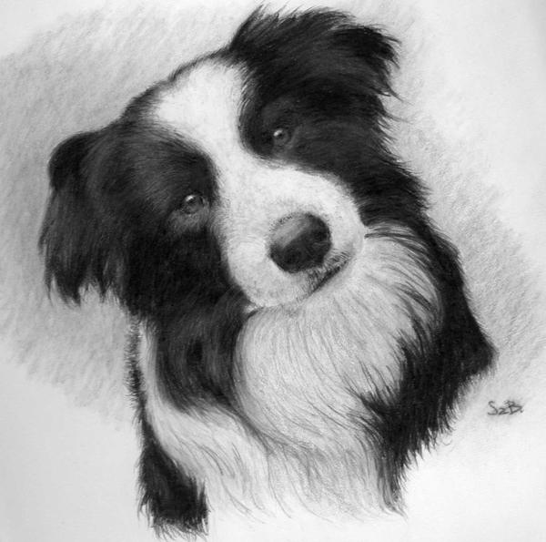 bordercollie by leriel bordercollie