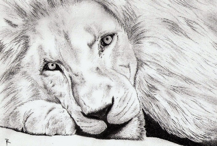 Lion Drawing (H... Easy Lion Drawings In Pencil