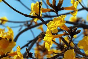 Spring Spirit by fallen-angel-24