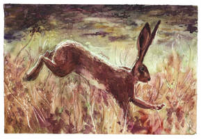 Leaping Hare by Fayven