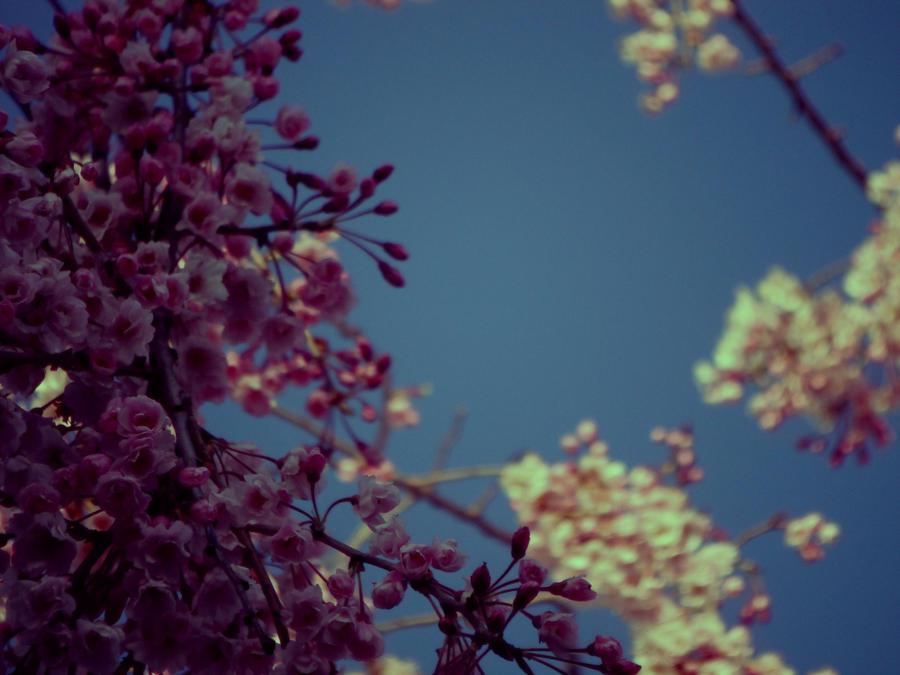 a spring frame by mysteriousfantasy