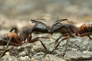 Ants.. by buleria