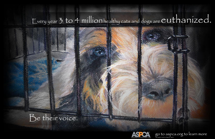 Animal abuse posters - photo#26