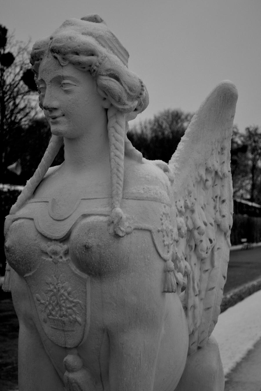 Winged Warrior by salmashukri