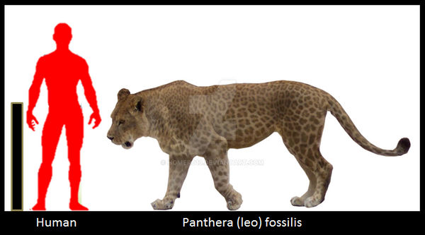 Panthera (leo) fossilis