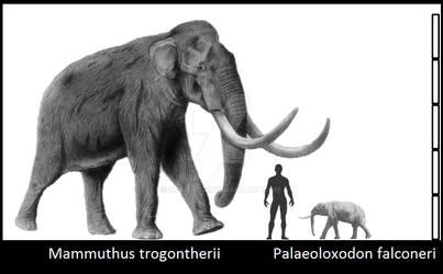 Extreme Elephants
