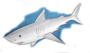 SHARKWEEK Thursd. Porbeagle