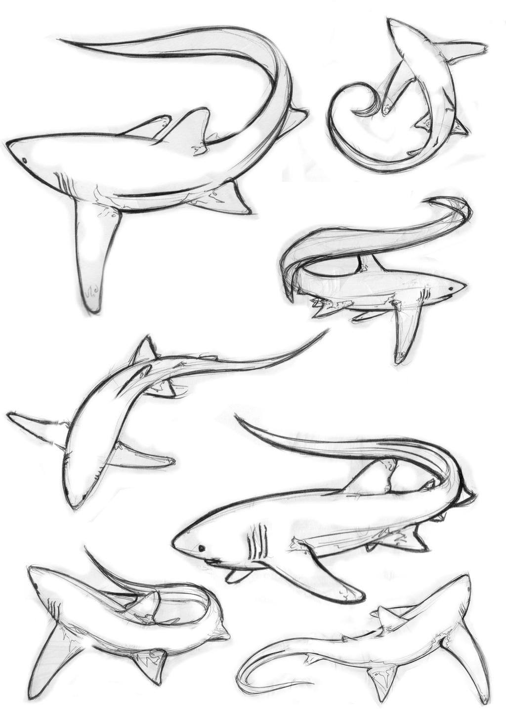Line Drawing Shark : Sharks line drawings